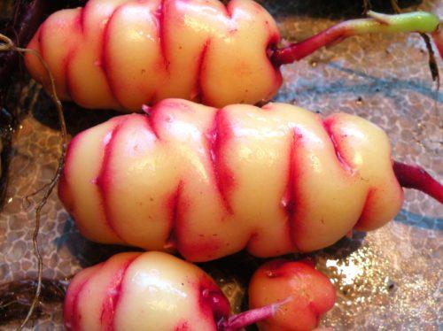 exotic vegetables oca