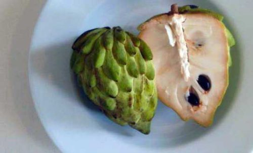 sugar-apple sweetsop atis exotic fruit