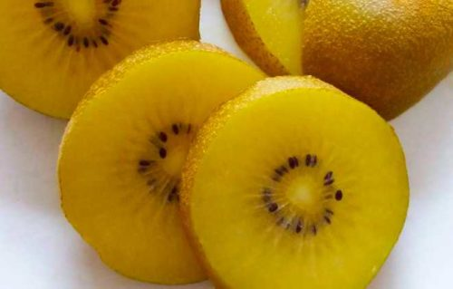 golden kiwi exotic fruits
