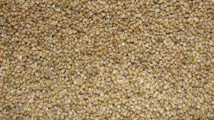millet grains superfood