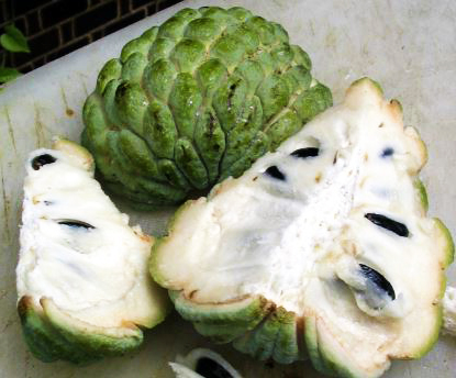 sweetsop custard apple sugar apple