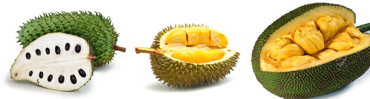 spiky prickly spiny fruits soursop durian jackfruit